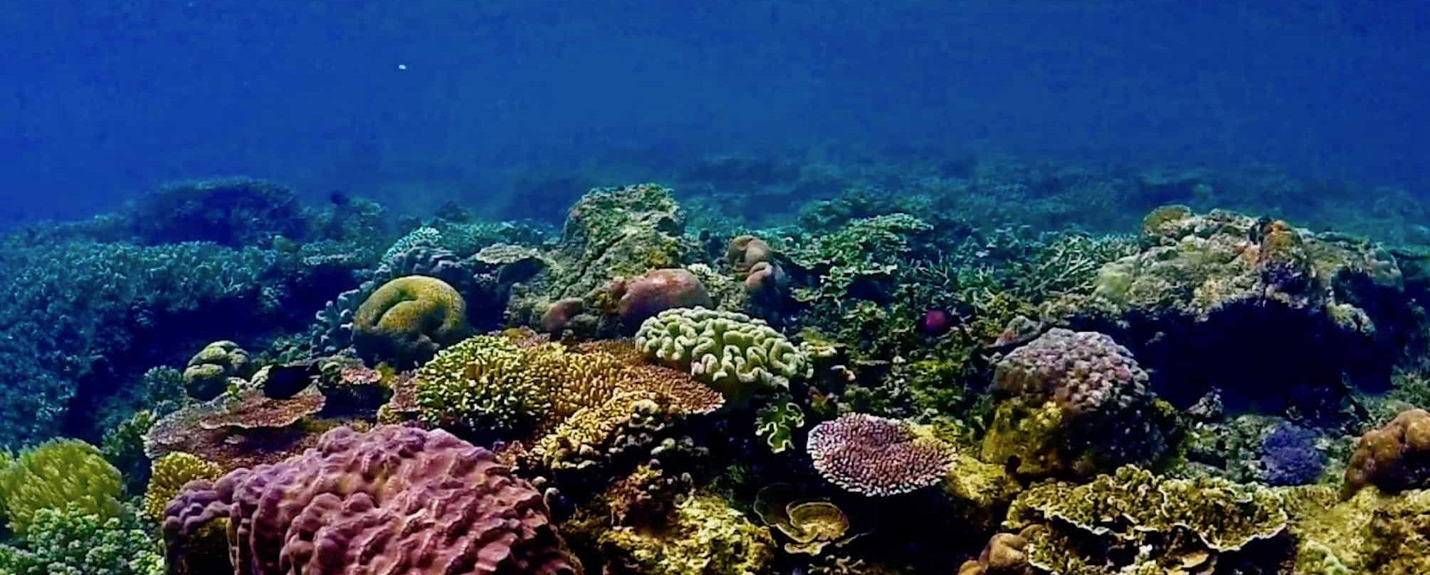 Beautiful Coral Reef Raja Ampat